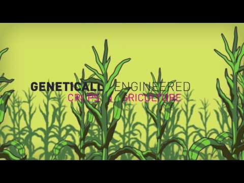 Genetic engineering: The world's greatest scam? - Kids and Science