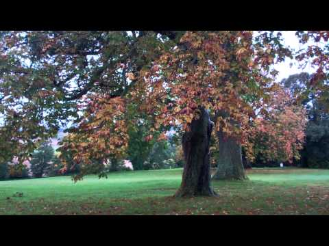 Autumn Trees And Rain Murrayshall Golf Course Scone Perthshire Scotland