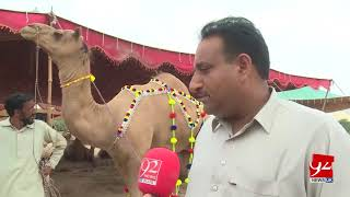Faisalabad : Camel prices soar with Eid just a few weeks away- 8 August 2018 - 92NewsHDUK