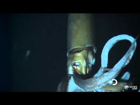 Giant Squid Caught on Tape for First Time for Discovery Channel's 'Monster Squid: The Giant Is Real'