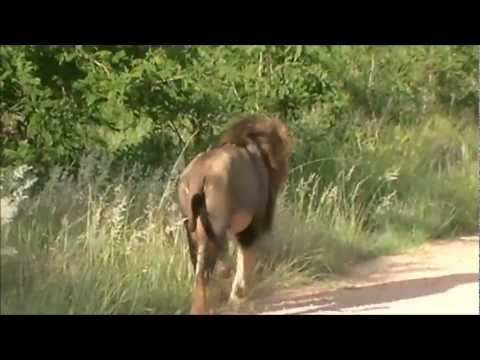 Tour Southern Africa – Bushveld Safaris