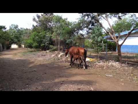 Asseradores, Nicaragua