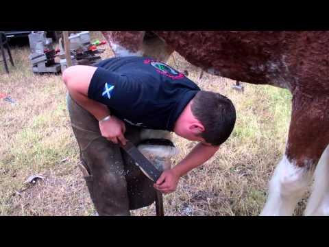 Farrier Agricultural Show Kirriemuir Angus Scotland