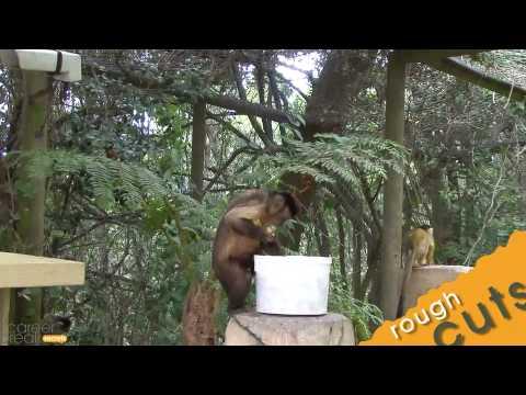 Monkeys Stealing Food in Monkeyland