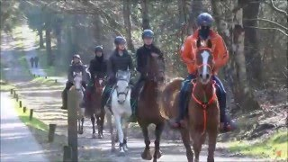 Audevard Next Endurance Generation Training Sallandse Heuvelrug
