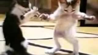 شاهدو  قطه ترقص هههه😍😍