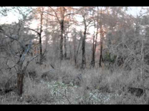 Baboons at Kruger National Park