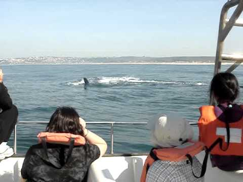Travel Bounty Inc: Whale Watching in Knysna (South Africa)