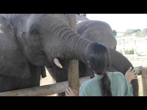 Elephants!!!!!!!