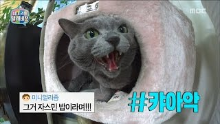 [My Little Television] 마이 리틀 텔레비전 -Honggi & Jonghun's cat, broadcasting refusing?! 20170520