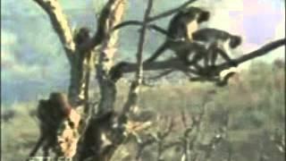 Macacos fazendo amor em cima da arvore