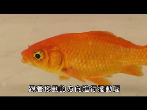 國小_自然_魚的運動方式【翰林出版_四上_第二單元 水生生物的世界】 - YouTube