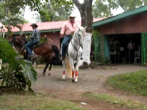 Dancing Paso Horses in Nicaragua