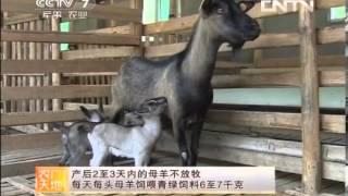 农广天地 《农广天地》 20130709 福清山羊养殖技术