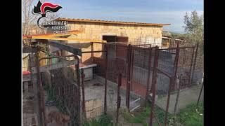 CROTONE: CANI DETENUTI ILLEGALMENTE IN STRUTTURA ABUSIVA