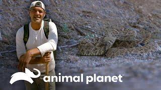 Frank reta a rudos pandilleros a encontrar una serpiente   Wild Frank en California   Animal Planet