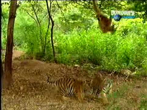 Tiger & Gibbon-very funny act - YouTube