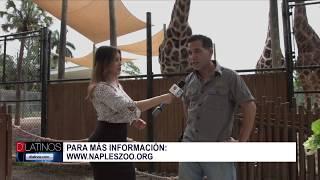 Naples Zoo celebra el Día de La Jirafa