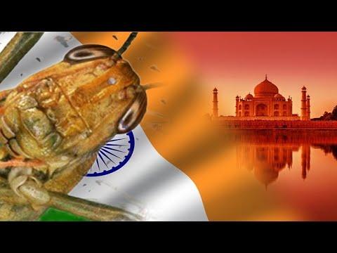 Praga de Gafanhotos de proporções Bíblicas invade também a índia
