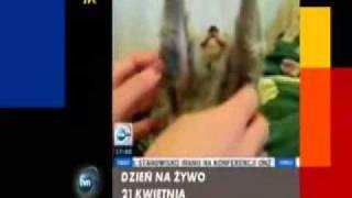 Mały lemurek (Mimika lemurka)
