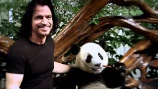 Yanni - World Wildlife Fund & Yanni -- Santorini the Panda