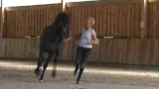Andalusierhengst Arrogante XXXII - das wunderbare Seelenpferd