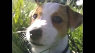 Jaromír Nohavica - Můj pes