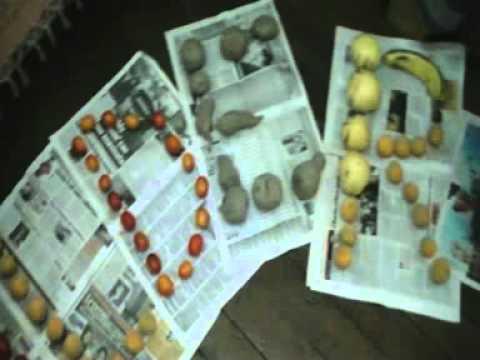 Viaje por Sudamerica di Giacomo Sanesi. Lima (PER). 01809 – scrivere con la frutta