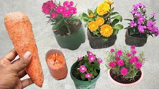 Melhor adubo natural para qualquer plantinha!
