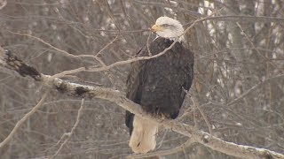 Birdwatchers flock to Nova Scotia for Eagle Watch