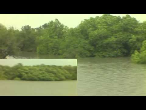 World's Largest Mangrove Forest : Sundarban