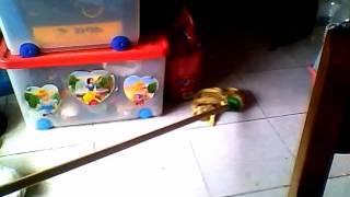hurona jugando ~ Mayra.wmv