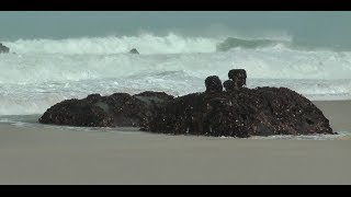 A TRAGIC SLICE OF St IVES - THE 1938 WRECK OF THE ALBA at PORTHMEOR BEACH