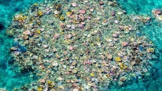 Video: Great Barrier Reef damaged by second straight year of bleaching