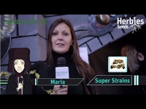 Super Strains Seeds @ Cannafest 2013 Prague / Praha