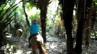 Horse Riding Through The Pantanal