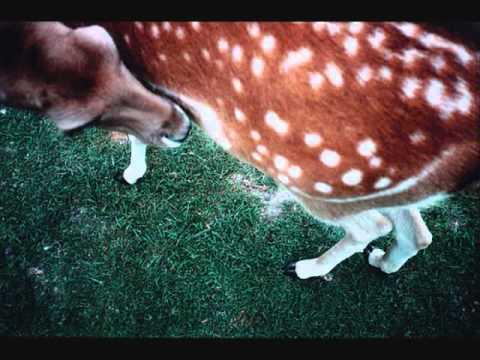 minks-little-fawn-laurencarhart