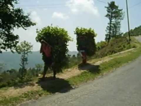WTF Moment #587: Walking Bushes in Nepal?