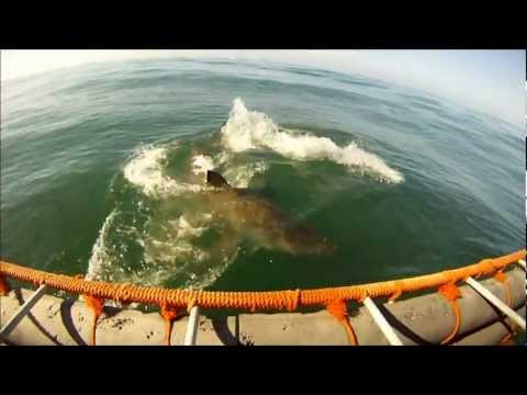 Great White viewing – Shark Diving Unlimited – Gansbaai, South Africa (01-14-2012)