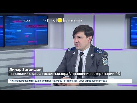 Начальник отдела госветнадзора Управления ветеринарии РБ Линар Зиганшин рассказал о новом законе об ответственном обращении с животными