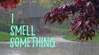 The smell of rain? | Petrichor explained