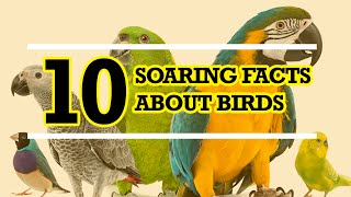 10 Soaring Facts about Birds