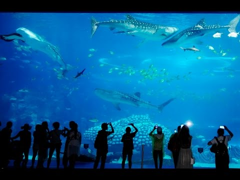 Deep Sea World | Aquarium