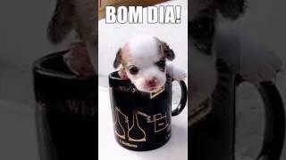 Vídeo do cachorrinho na xícara falando bom dia