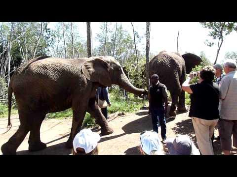 Elephant Sanctuary – Video 1 of 4