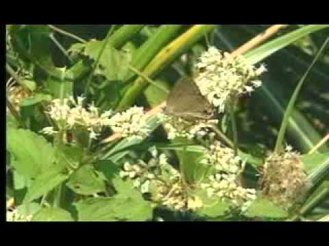 小昆蟲的變身術 - YouTube