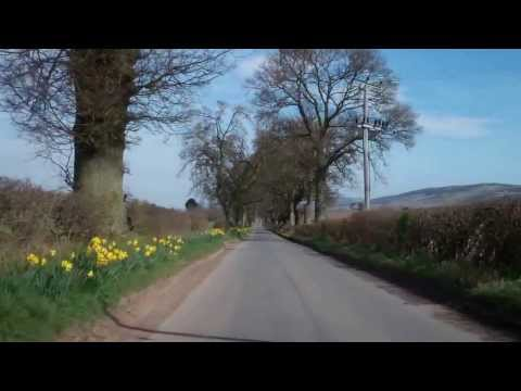 Daffodils Drive Perthshire Scotland March 29th