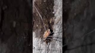 Thirsty Spider