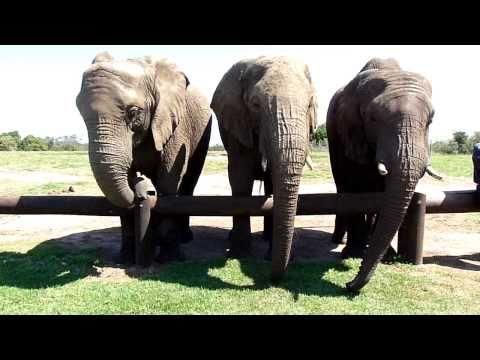 Elephant Sanctuary – Video 2 of 4
