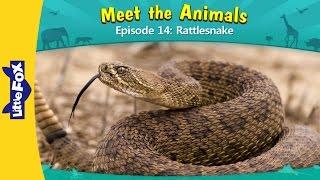 Meet the Animals 14 | Rattlesnake | Wild Animals | Little Fox | Animated Stories for Kids